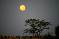 Moon rise from the Okavango